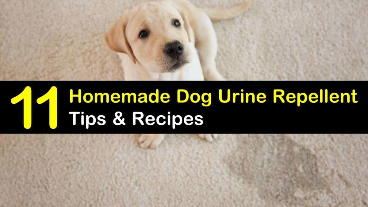Homemade Dog Urine Repellent