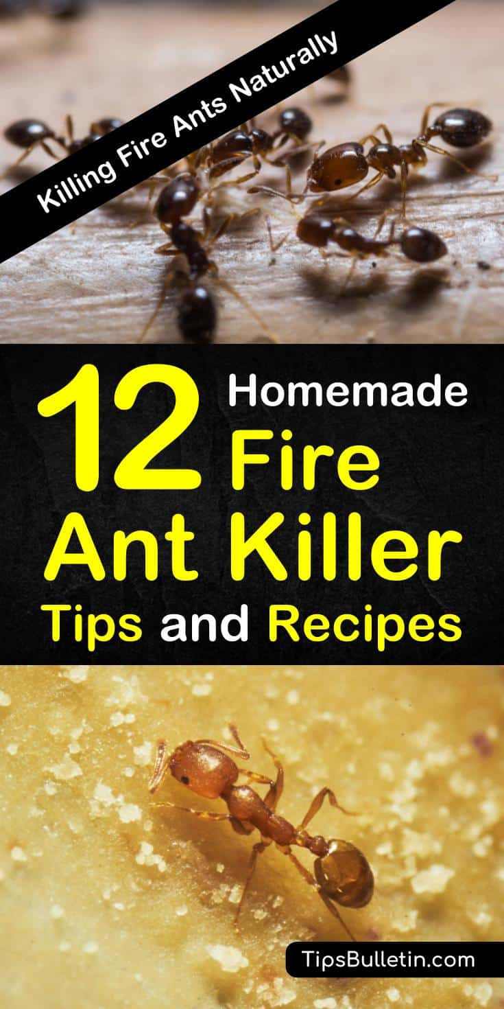 Fire ants are more than a nuisance, they can be deadly. Learn how to