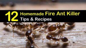 homemade fire ant killer titleimg1