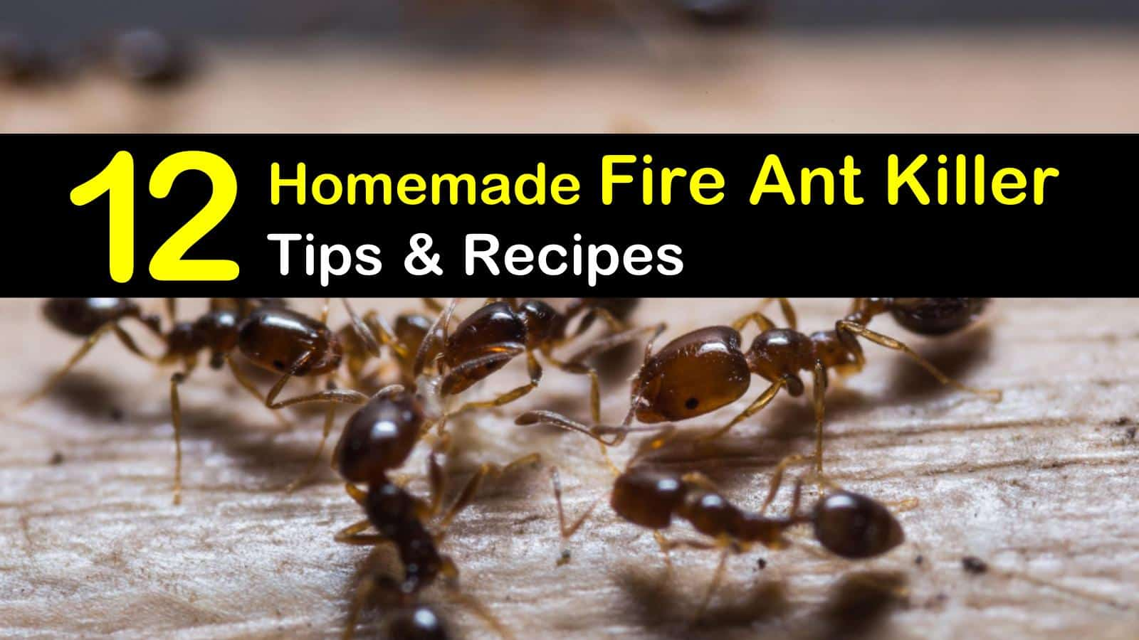 12 Do It Yourself Fire Ant Killer Recipes That Work