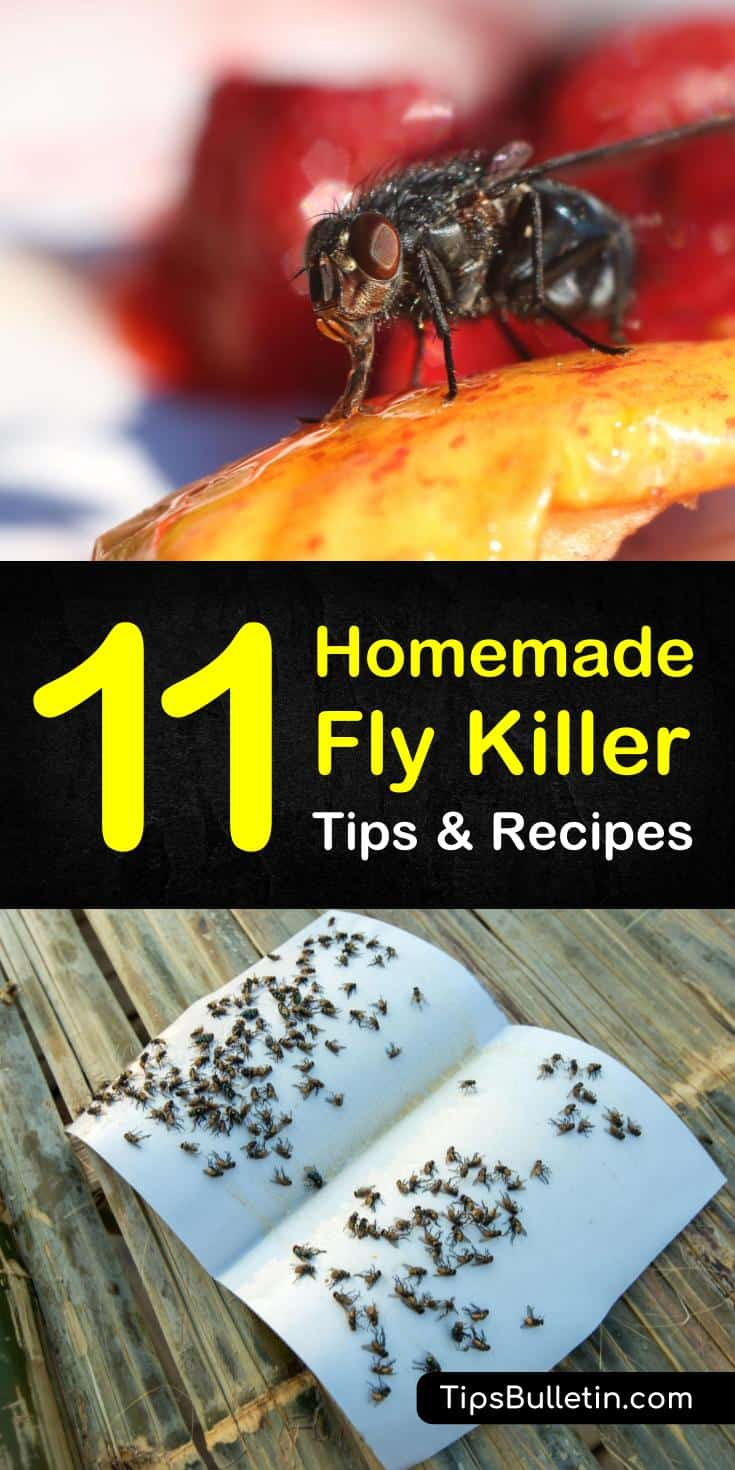 Useful Tips To Make Your Everyday Life Just A Bit BetterTips and tricks to keep flies and other pests away! Learn how to make fruit flies go away forever, and other diy indoor pest control sprays using essential oils, apple cider, water, and other natural ingredients. #flies #pestcontrol