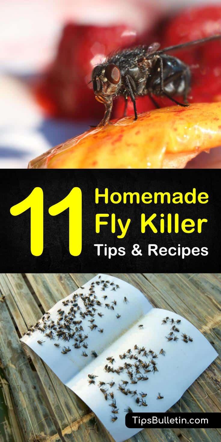 Homemade Fly Killer Recipes: 11 Natural Tips For Killing Flies
