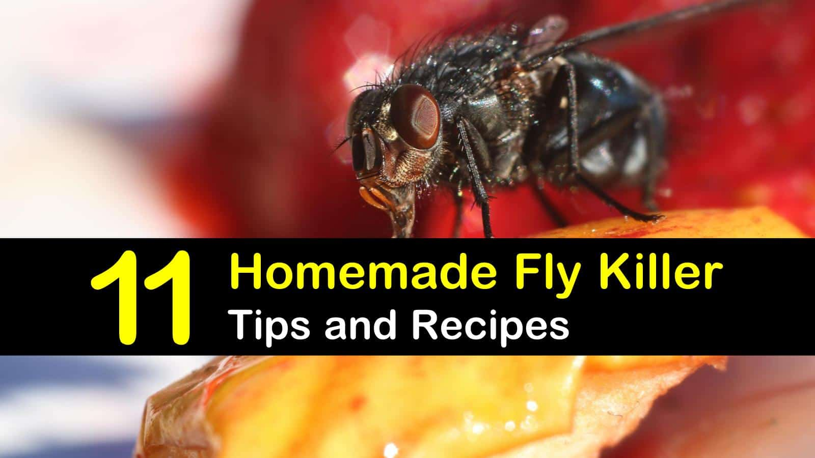 homemade fly killer titleimg1