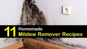 homemade mildew remover titleimg1