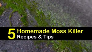 homemade moss killer titleimg1