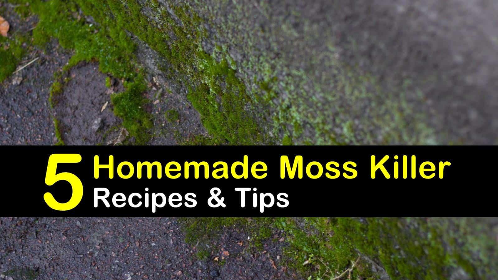 homemade moss killer titleimg1