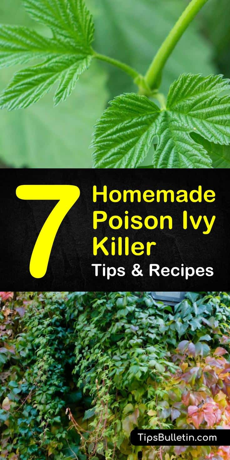 Brushing up against some poison ivy can easily ruin your day, even your week. Here are a few ways you can cut it off at the source and make your own homemade poison ivy killer. #natural #homemade #diyspray