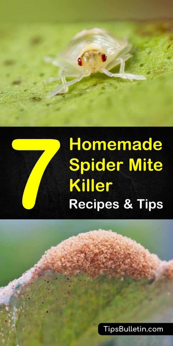 Learn how to protect your garden and plants with these various homemade spider mite killer tips and tricks. Keeping your garden healthy is hard enough. With this extra help, maintaining your garden just got easier. #pestcontrol #spidermites #healthygarden