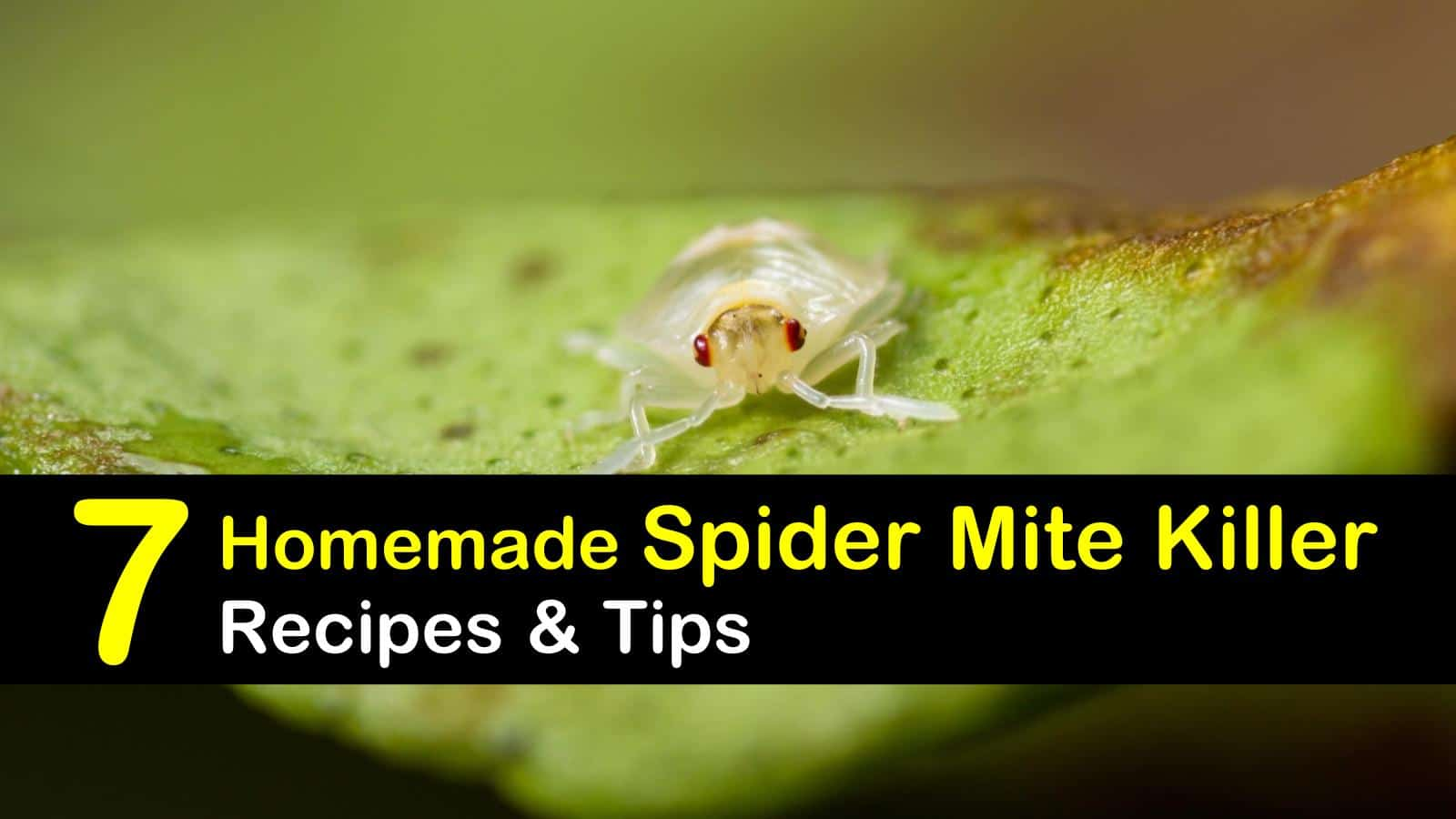 7 Natural Ways to Kill Spider Mites