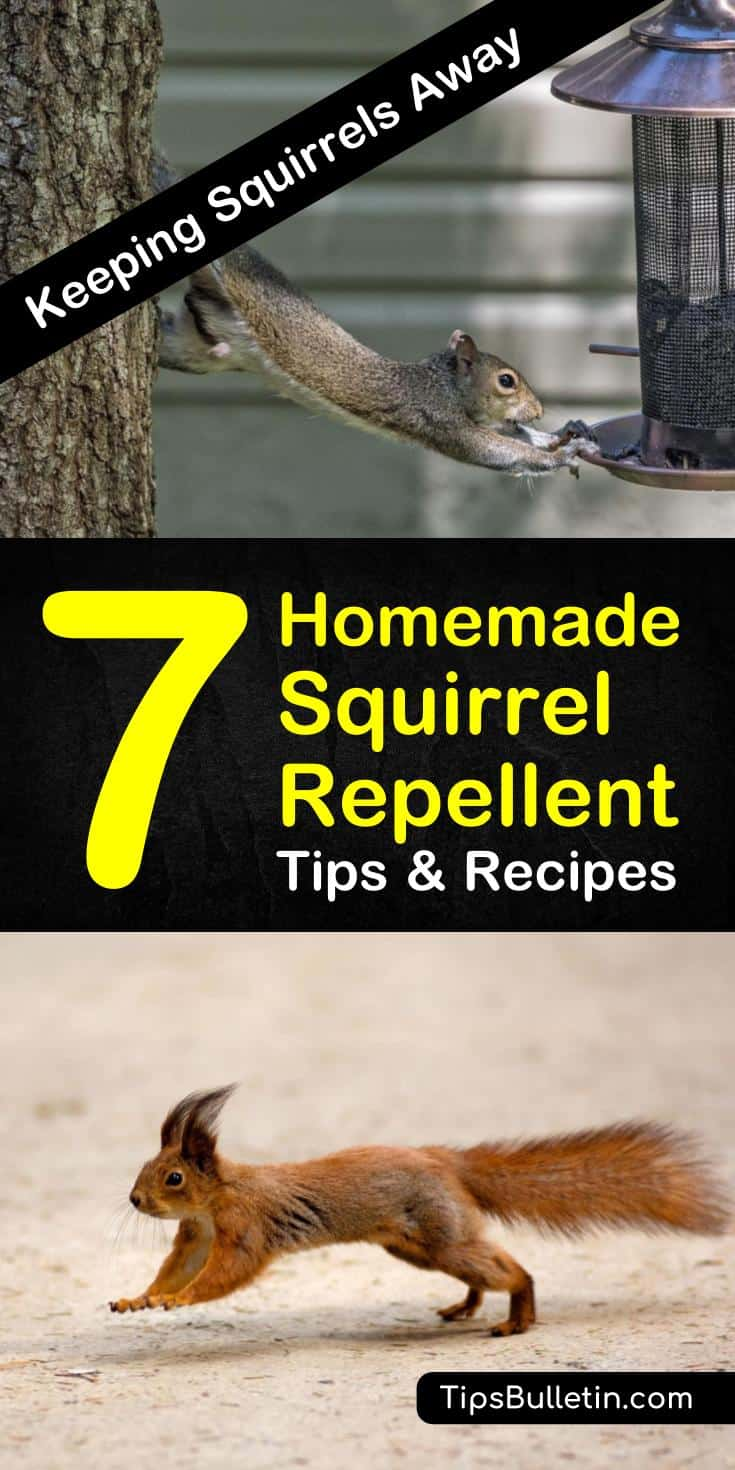 Keeping squirrels away 7 homemade squirrel repellent - How to keep squirrels away from garden ...