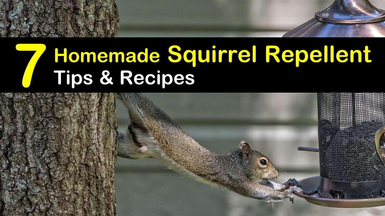 Homemade Squirrel Repellent
