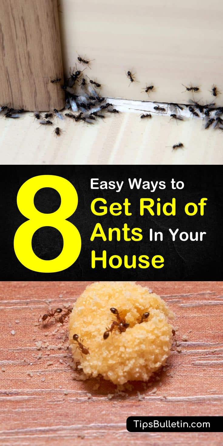 Learn how to take your pest control efforts to the next level by getting rid of ants for good! Keep ant colonies out of your home and kitchen this summer by using natural materials like baking soda and essentials. #diyantkillers #homemadepestcontrol #naturalantcontrol