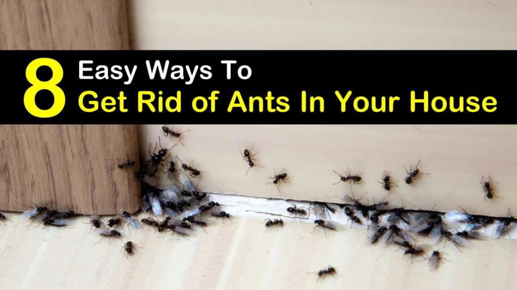 Ants Invasion: 8 Easy Ways To Get Rid Of Ants In Your House