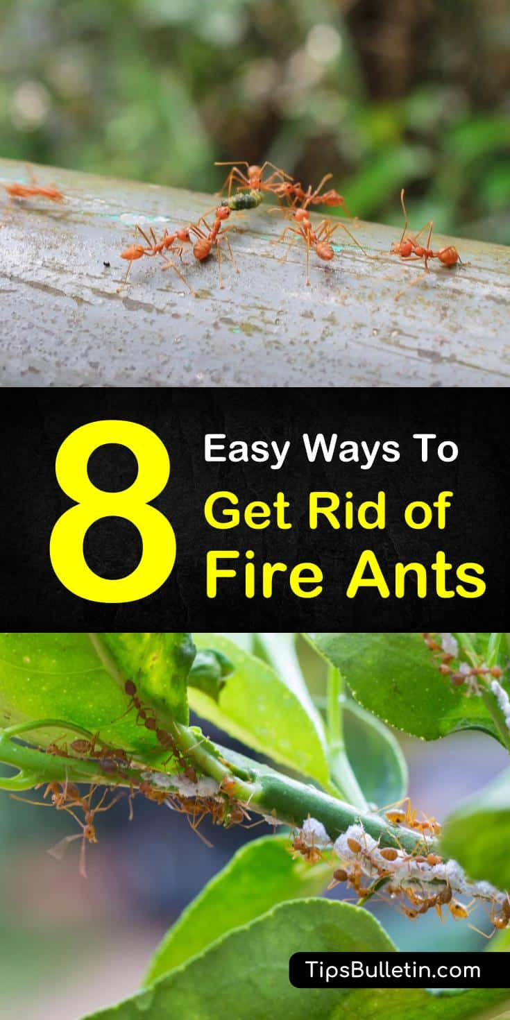 and gardens free from fire ants. Learn how to make pest control using ingredients in the house such as baking soda, water, and essential oils. #FireAntRepeller