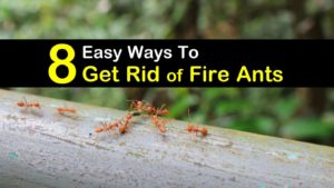 how to get rid of fire ants titleimg1