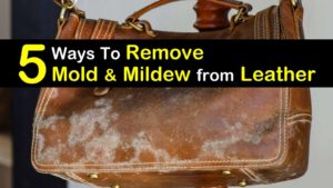 how to remove mold from leather titleimg1