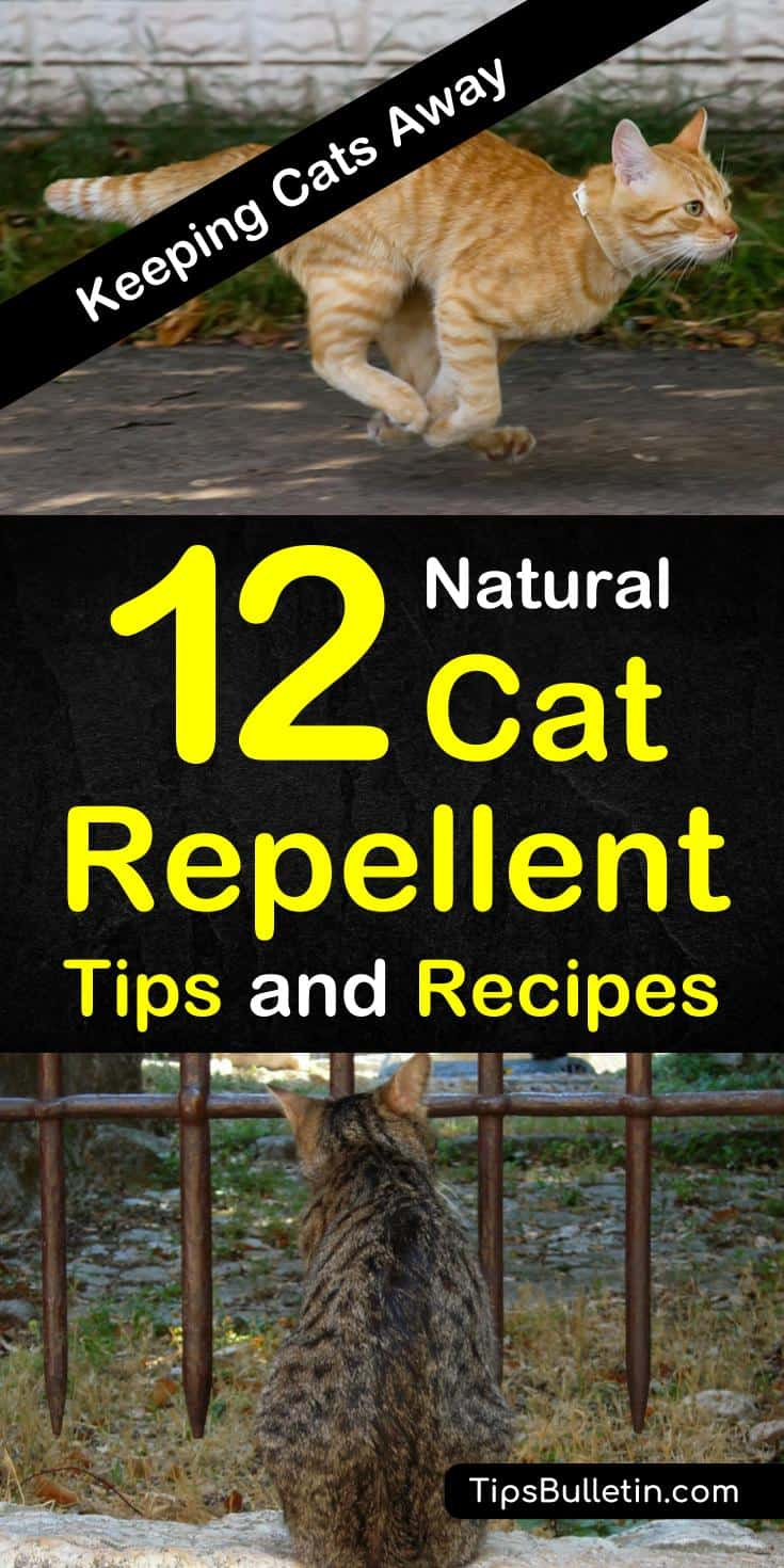 Tired of your indoor cats shredding your prized furniture? Are your flower beds the new litter box? Natural cat repellent using essential oils can save your house and gardens. #homemadecatrepellent #cats #keepcatsaway #garden
