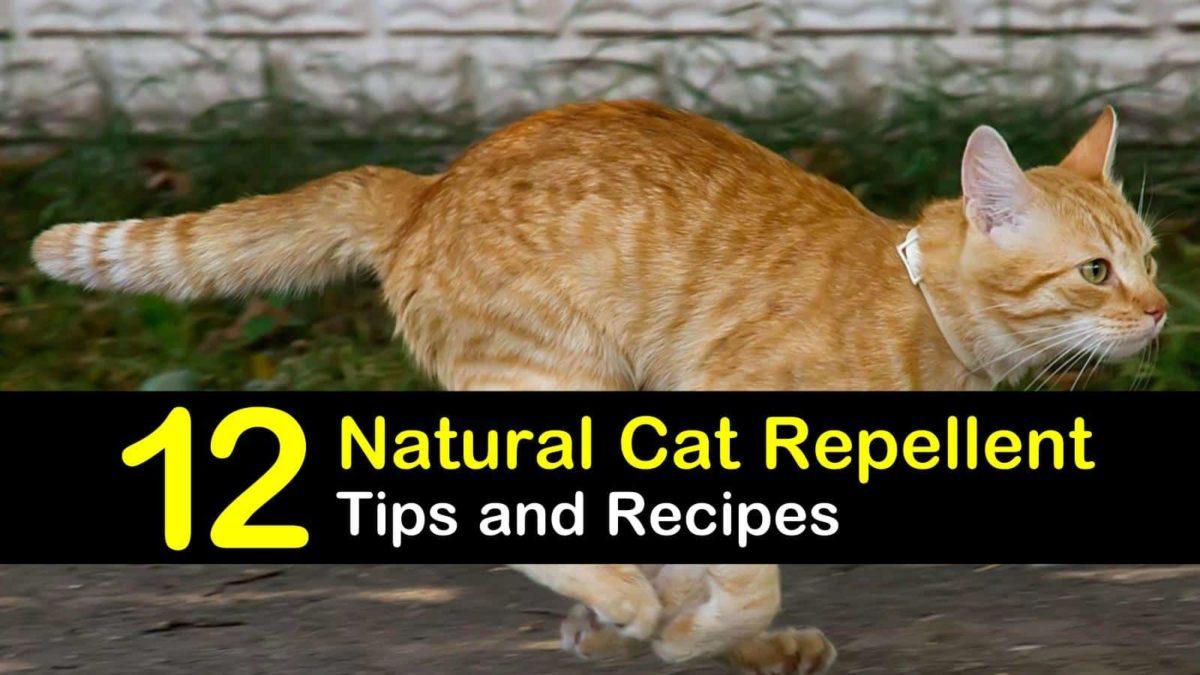 Keeping Cats Away - 12 Natural Cat