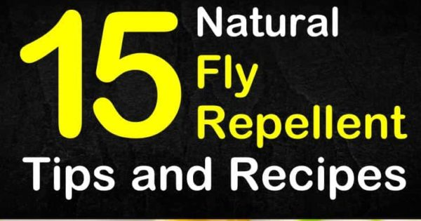 Keeping Flies Away - 15 Natural Fly Repellent Tips and Recipes