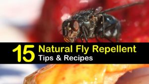 natural fly repellent titleimg1