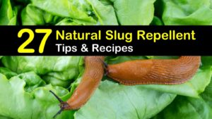 natural slug repellent titleimg1