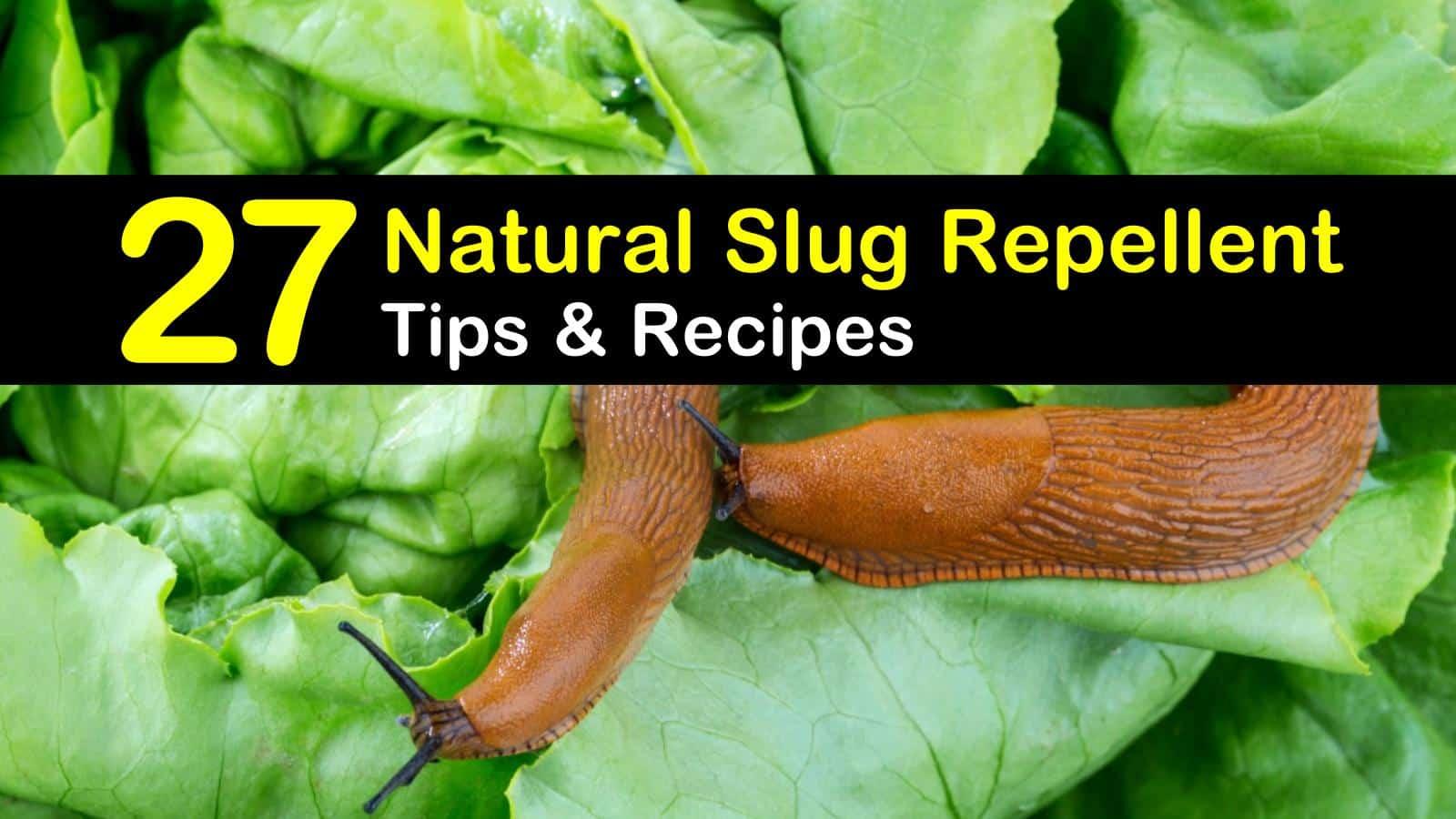 natural slug repellent titleimg1