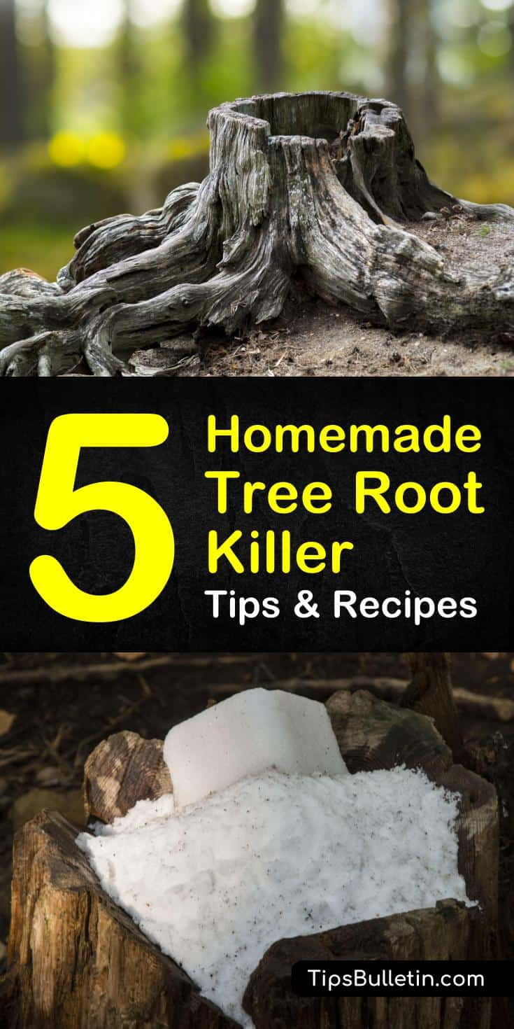 Discover 5 diy homemade solutions as a tree root killer. If you have a tree root problem obstructing your sewer and pipelines, you can use these simple, common household ingredients, like vinegar and Epsom salts to remove stumps and tree roots. #stumpremoval #chemicalfree #rocksalt