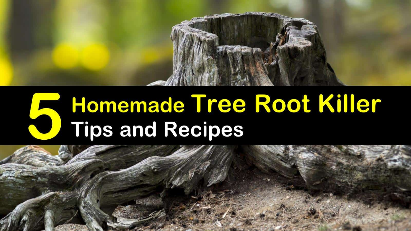 Cheap Tree Stump Removal 5 Homemade Tree Root Killer