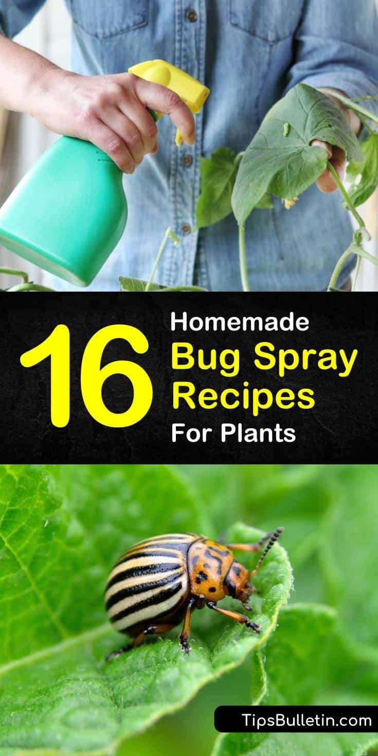 Stop using commercial pesticides on your vegetable garden. Learn how to make your own homemade bug spray for plants using simple ingredients like water and cayenne peppers. #naturalpesticide #homemadebugspray #chemicalfree