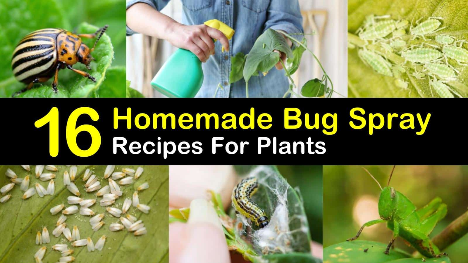 Bug Spray Recipes for Plants