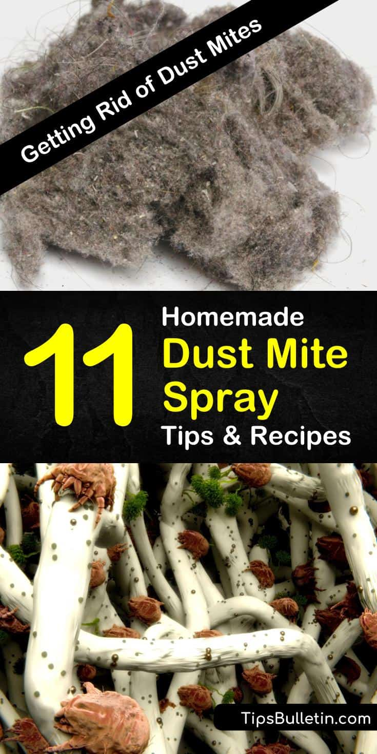 Learn to make an amazingly simple DIY, homemade dust mite spray using natural ingredients like essential oils and baking soda. Get rid of those bed bugs as soon as possible with these tips and tricks. #dustmites #homemadespray