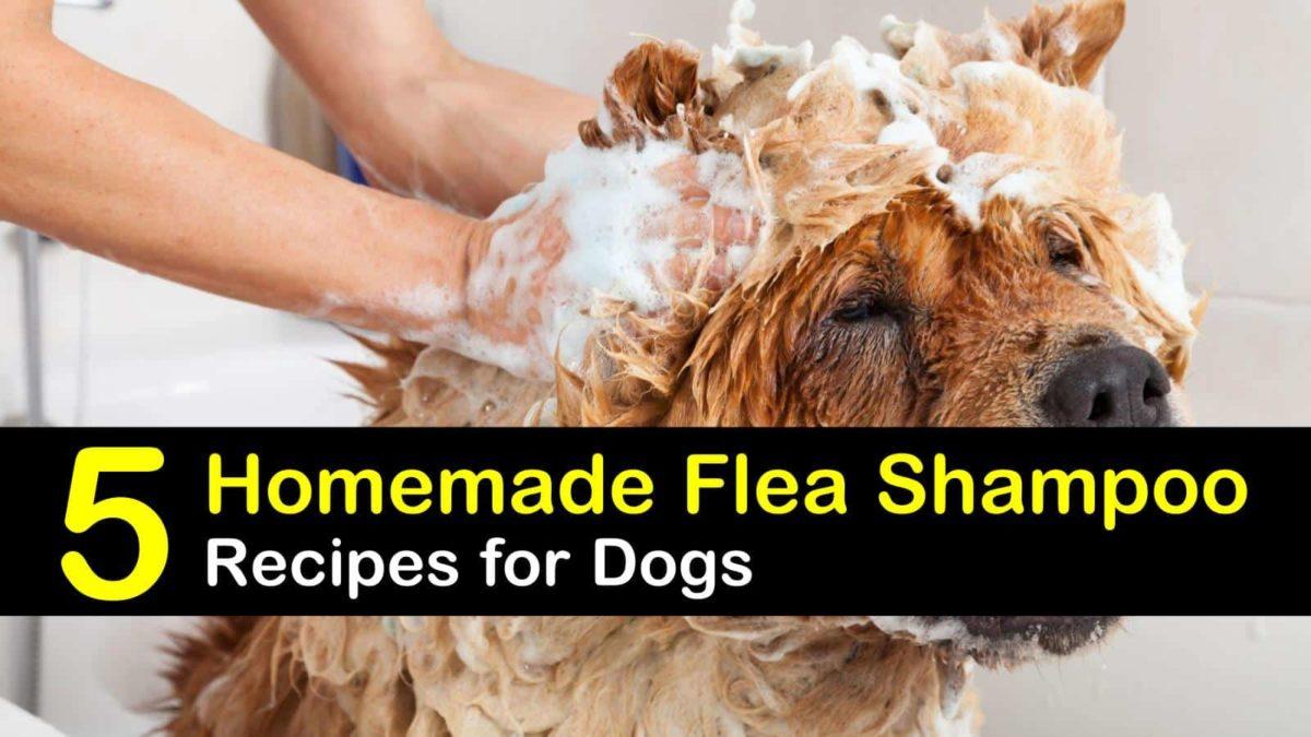 Homemade Flea Shampoo Recipes For Dogs
