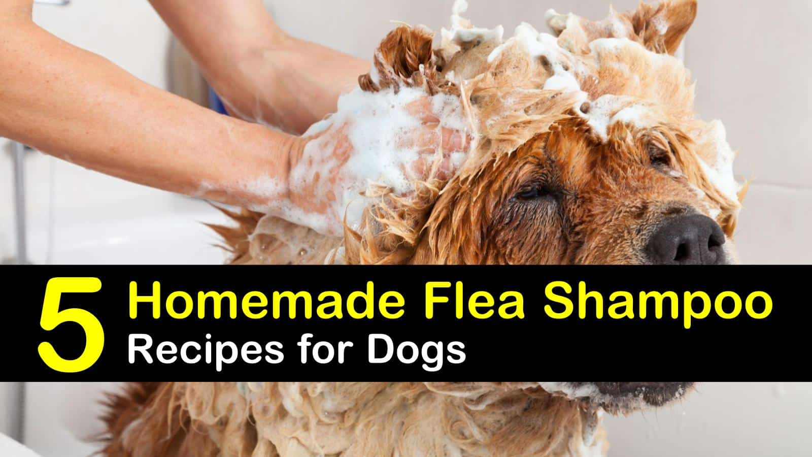 Homemade Flea Shampoo Recipes for Dogs