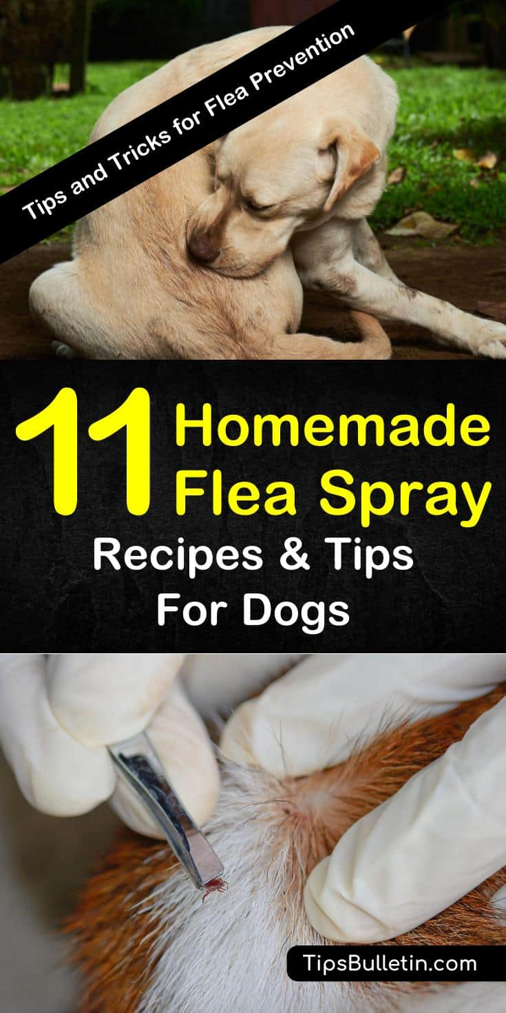 Learn about these different recipes for homemade flea spray for dogs to help make life for your furry friend a little less itchy and a lot more fun. #fleaspray #dogfleaspray #homemadefleaspray