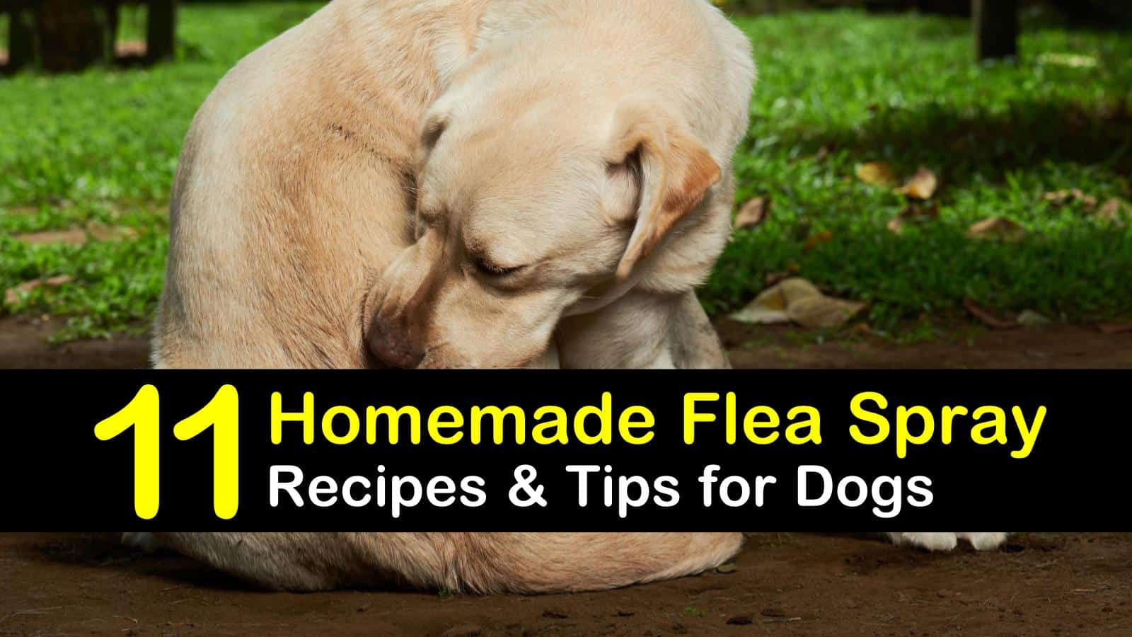 homemade flea spray for dogs titleimg1