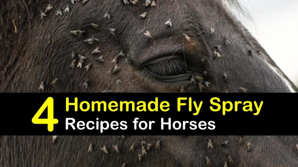 4 Homemade Fly Spray Recipes And Tips For Horses