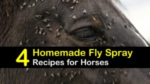 homemade fly spray for horses titleimg1