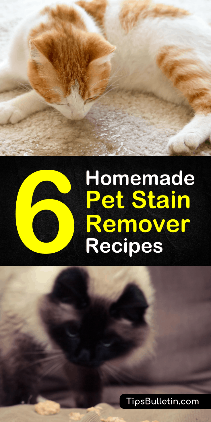 Nobody wants to walk into a house that reeks of cat or dog pee. Our homemade pet stain remover recipes use baking soda, vinegar, and hydrogen peroxide to get rid of urine smells. #petstains #odorremover #homemadestainremover