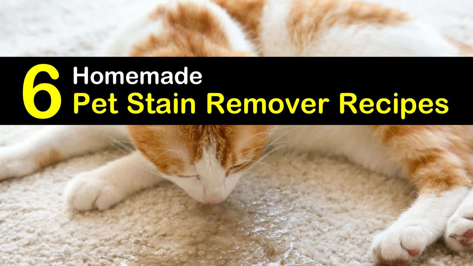 homemade pet stain remover titleimg1
