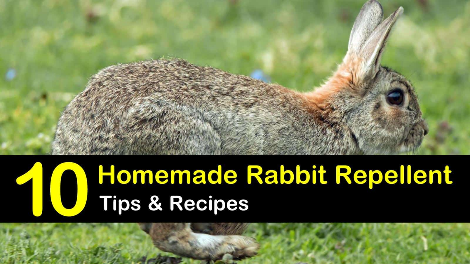 homemade rabbit repellent titleimg1