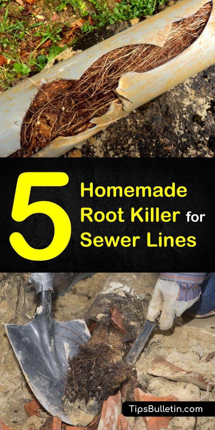 Discover five effective root killer recipes that you can easily use at home. These five homemade root killer for sewer lines recipes will kill tree roots fast and get your sewer lines unblocked. #treerootkiller #killtreeroots #treeroots