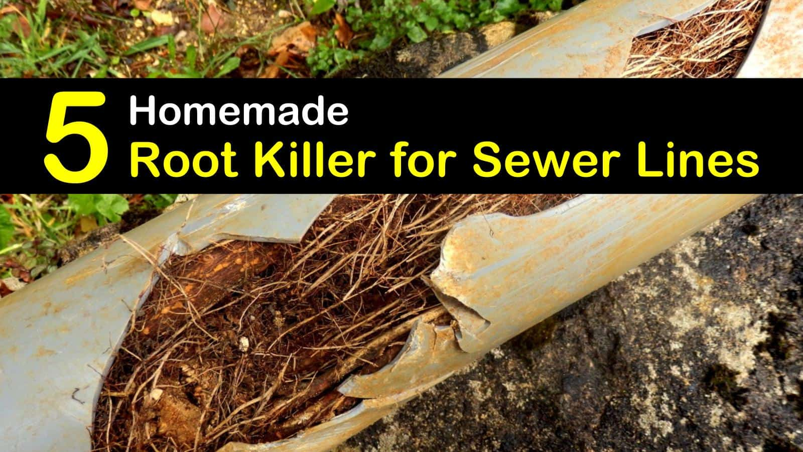 homemade root killer for sewer lines titleimg1