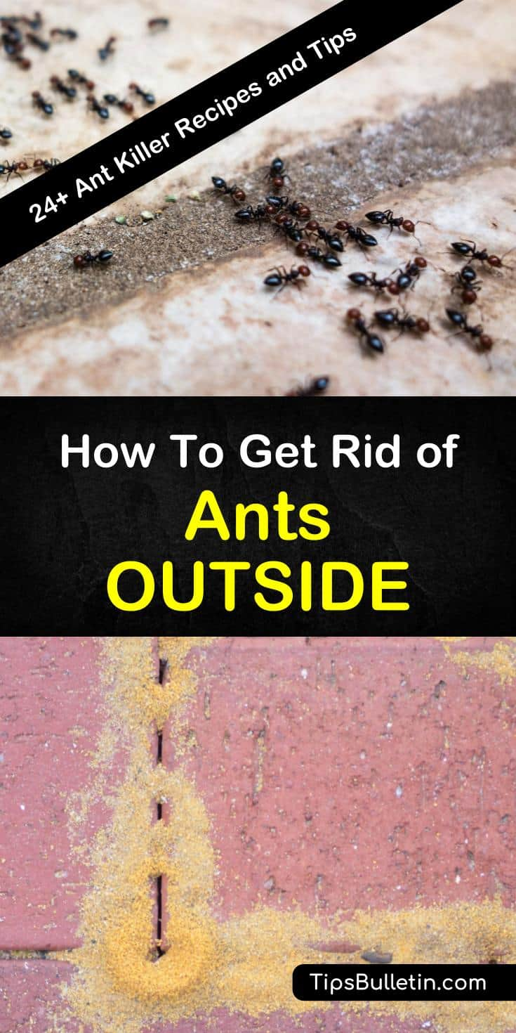 Ants might seem harmless, but these pests not only ruin picnics they can invade your home. Learn how to get rid of ants outside using DIY pest control recipes with boric acid, sugar, and essential oils. #ants #outside #getridofants #antproblem #pestcontrol