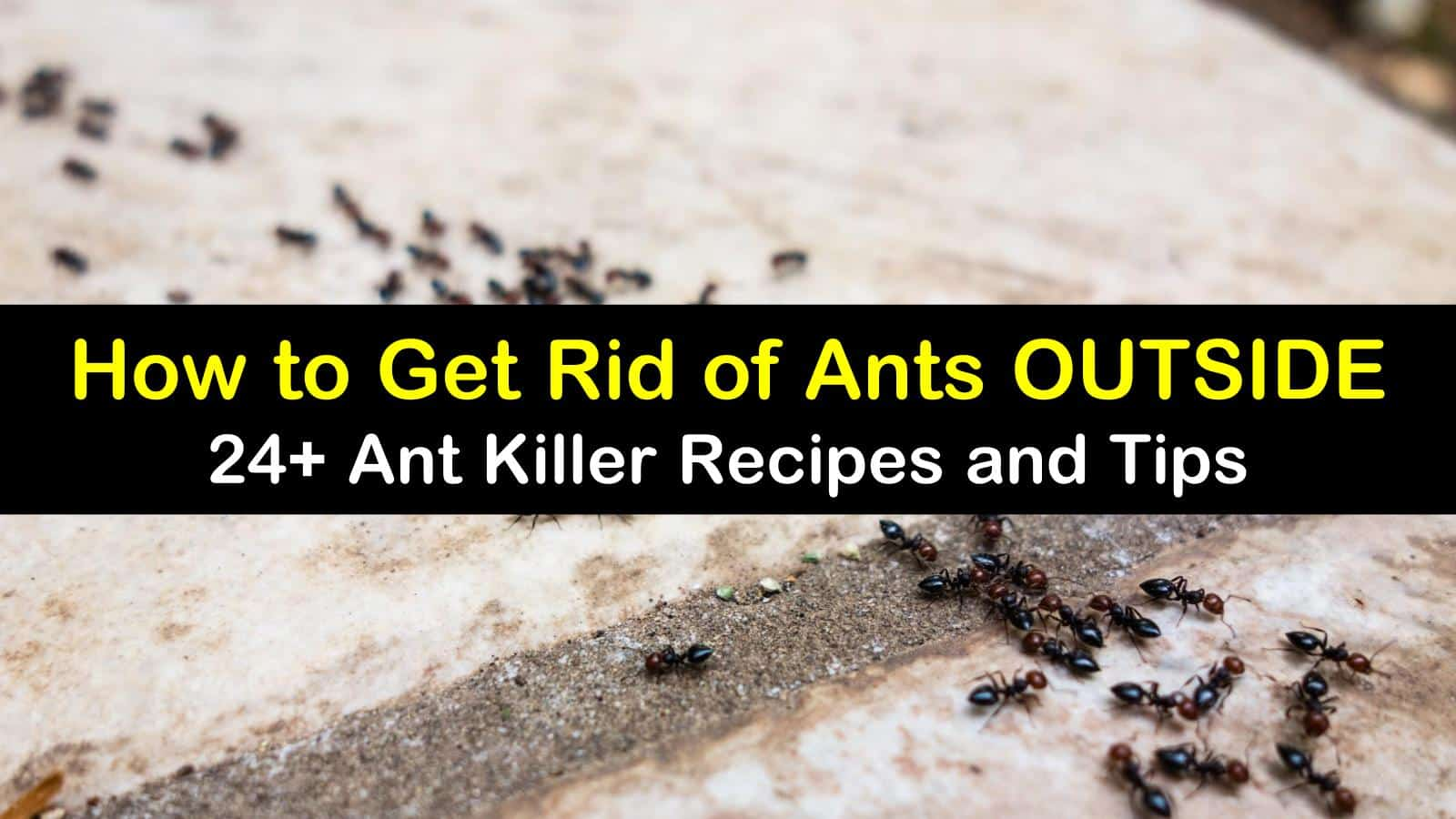 how to get rid of ants outside titleimg1