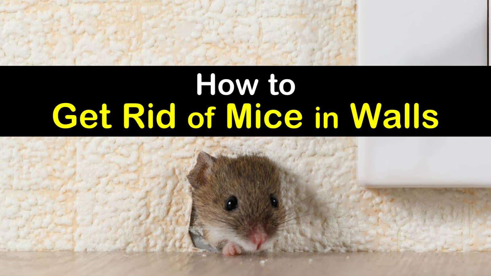 Mouse In Your House How To Get Rid Of Mice In Walls