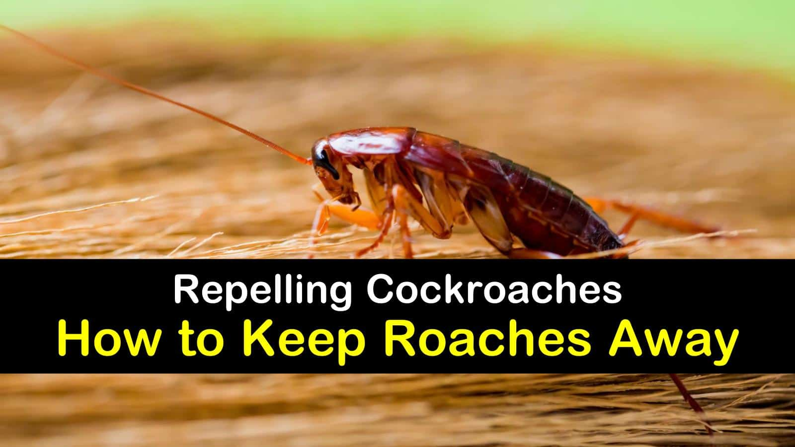 how to keep roaches away titleimg1