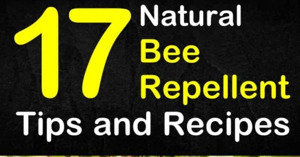 Keeping Bees Away - 17 Natural Bee Repellent Tips and Recipes
