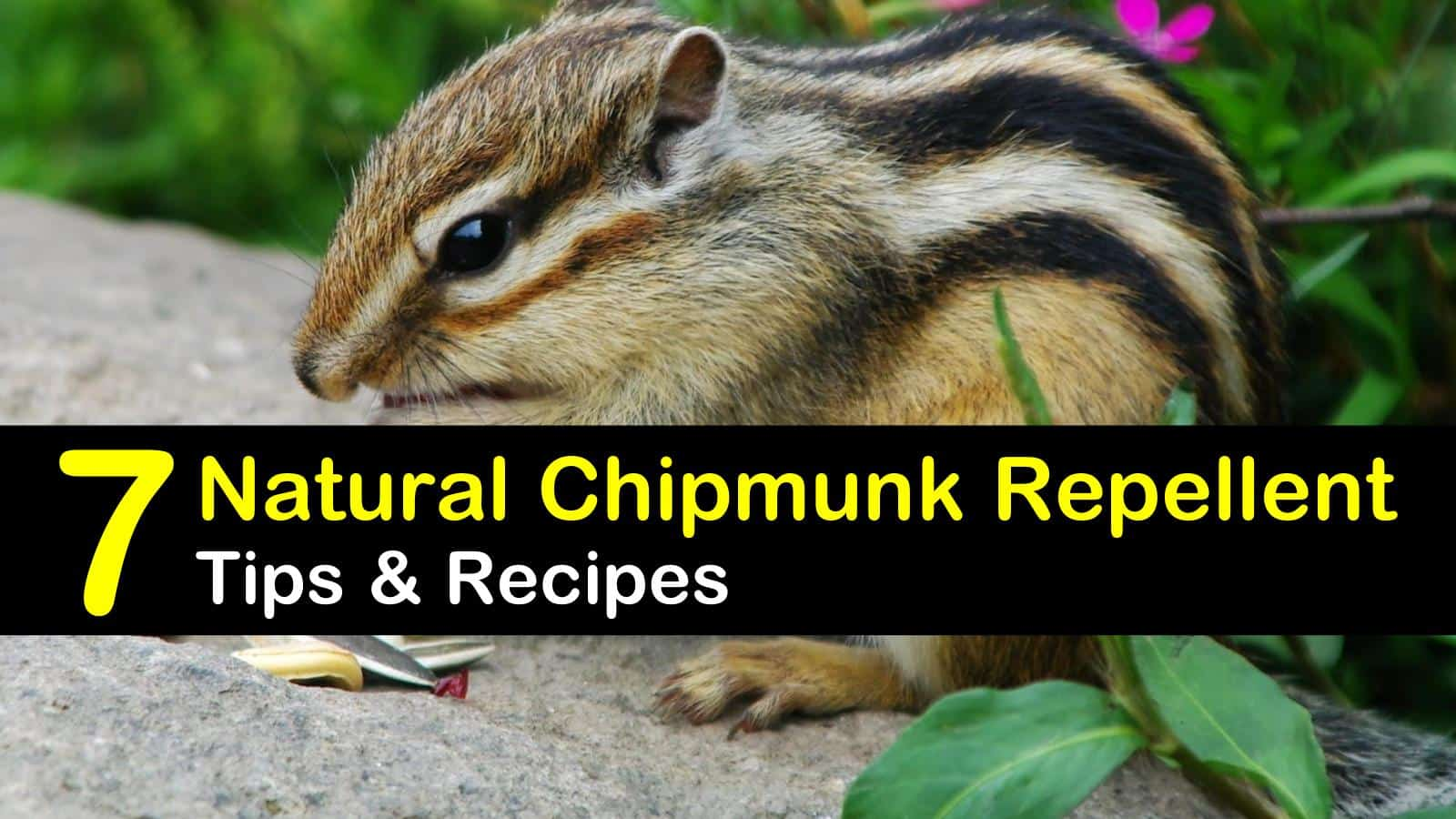 natural chipmunk repellent titleimg1