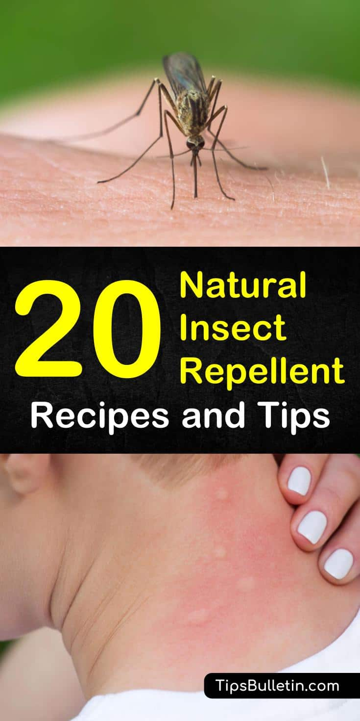 Learn how to get rid of bugs with natural insect repellent tips and recipes. Keep bugs away from your skin with these natural insect repellents that use simple ingredients like peppermint oil, witch hazel and various plants for pest control. #naturalinsectrepellent #repelbugs, #DIYinsectspray