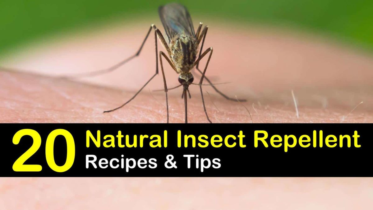 20 Simple Organic Insect Repellents